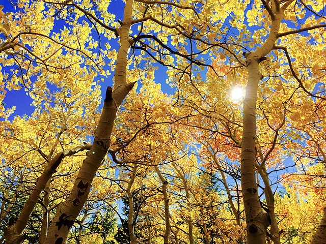 листья, осень, au