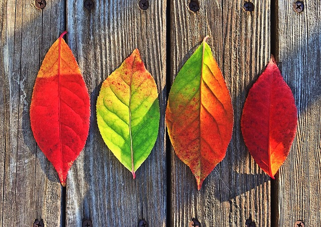 листья, осень, цветы