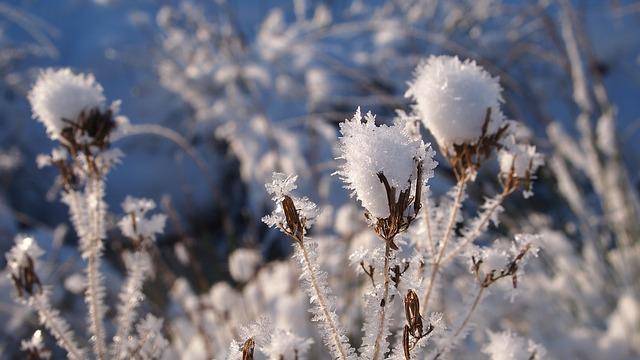 снег, завод, сердце