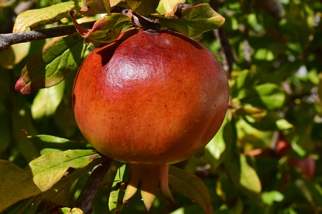 гранат, спелый, фруктов