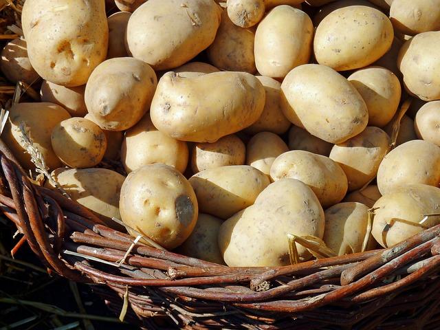 картофеля, осенью, природы