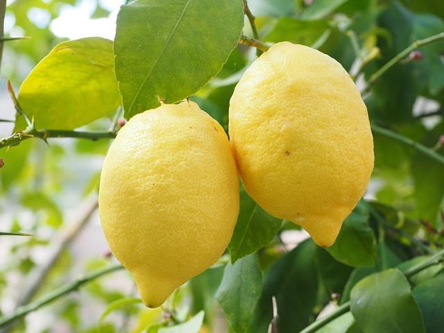 лимон, лимоне, лимонное дерево