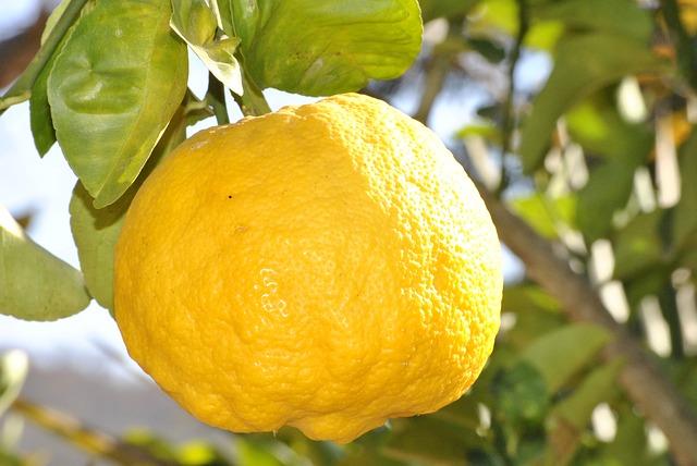 лимон, оранжевый, плоды