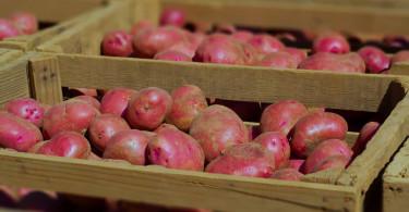 Правила хранения картофеля в квартире зимой
