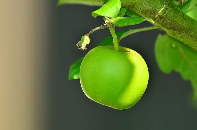 apple, зеленое яблоко, дерево