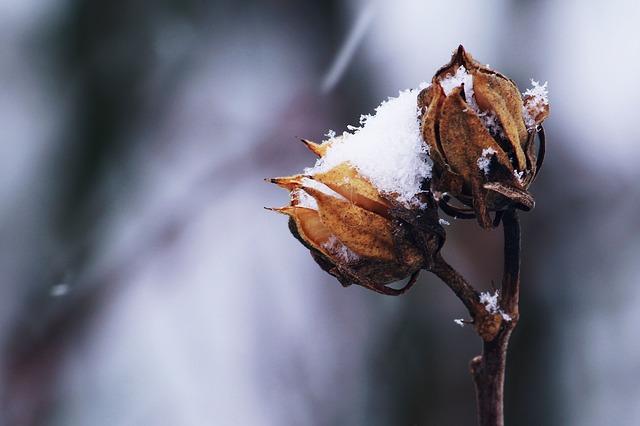 снег, зимой, белый