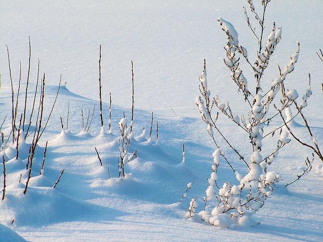 зима, мороз, снег